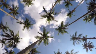 Tropical Paradise Island with Palm Trees and Blue Sky. Time Lapse.