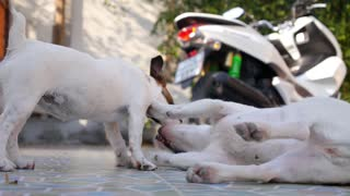 Two Cute Dogs Playing Together Outdoors