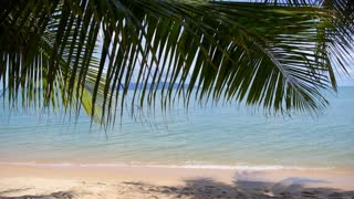 Vacation with Coconut Palm Tree and Beach on Tropical Island