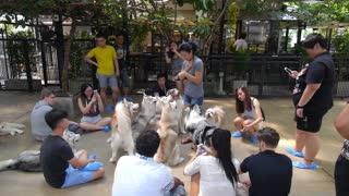 BANGKOK, THAILAND, SEPT 20, 2016: Dog Cafe with Siberian Husky
