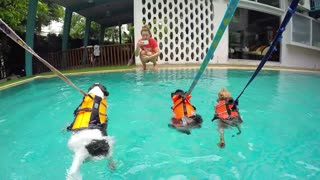 Group of Cute Dogs Training In Swimming Pool
