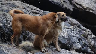 Romantic Dog Couple In Love Outdoors