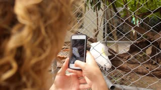 Woman Taking Photo of Cockatoo by Smartphone. Slow Motion.