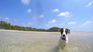 Young Happy Dog Running on the Beach. Slow Motion.