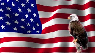 Bald Eagle in front of Waving USA Flag Seamless Looping Motion Background