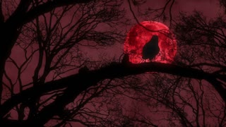Scary Creepy Crow or Raven From Hell Sitting on Tree Branch During Blood Red Full Moon Night Full Hd 1920 1080