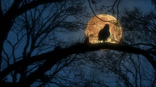 Scary Creepy Crow or Raven Sitting on Tree Branch During a Full Harvest Moon Night with a Blue Sky and Orange Moon Full Hd 1920 1080