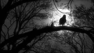Scary Creepy Crow or Raven Sitting on Tree Branch During a Full Moon Night with Cloudy Sky Full Hd 1920 1080