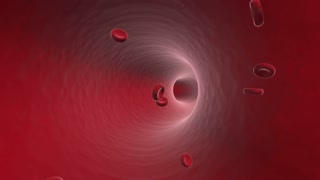 Red Blood Cells Swimming inside Human Veins Arteries 1920 X 1080 Full HD