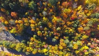 Above the trees at Fall | Ontario, Canada. 4K Aerial footage shot at fall in Ontario, Canada.