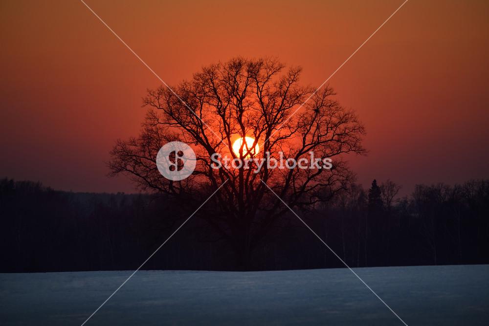 Oak Tree In The Field Against The Setting Sun