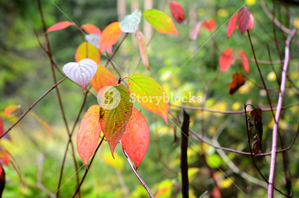 Autumn Leaves Close-up In The Forest