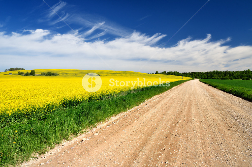 Countryside Road And Yellow Field