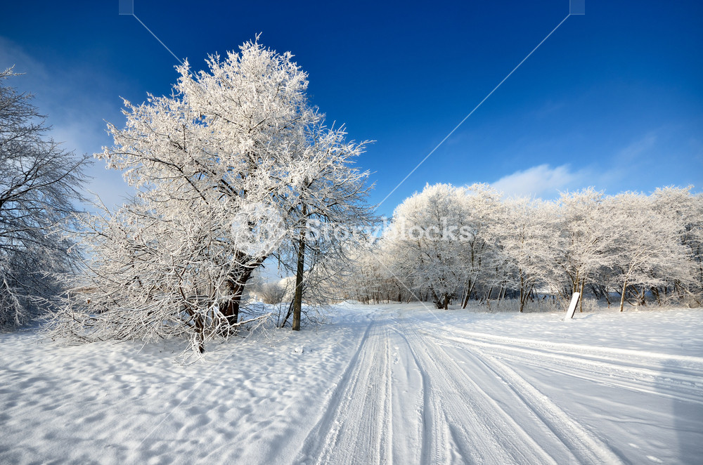 Road And Frost On Trees In Winter