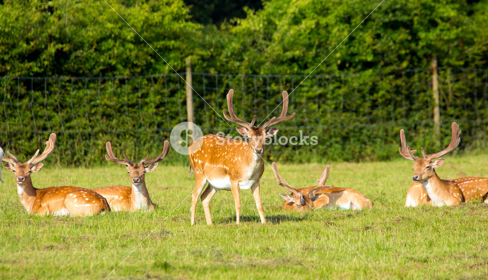 Red deer with antlers in the New Forest Hampshire England uk