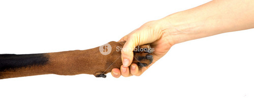 Friendship between human and animal - puppy give woman paw - han