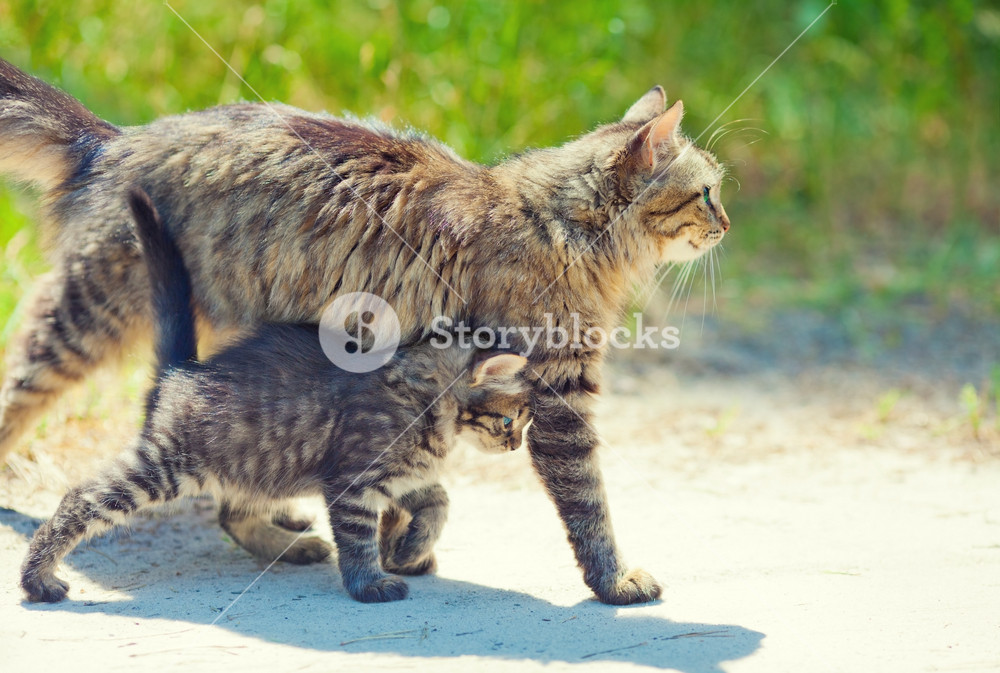 A cat with a kitten is on the path in the garden
