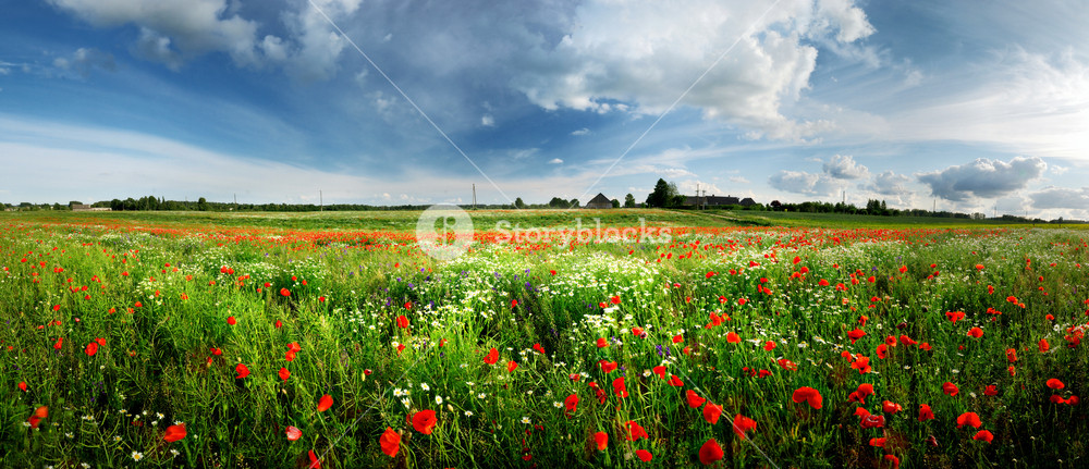 A Poppy Field And A Country View In Latvia