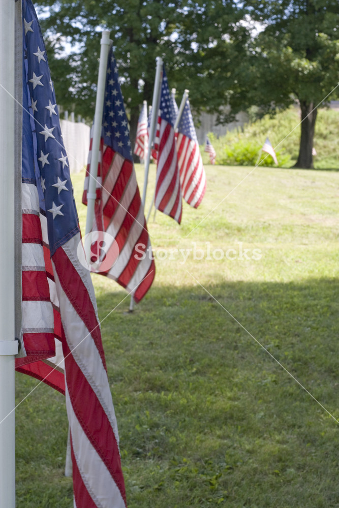 A row of American flags for a Veterans memorial service.