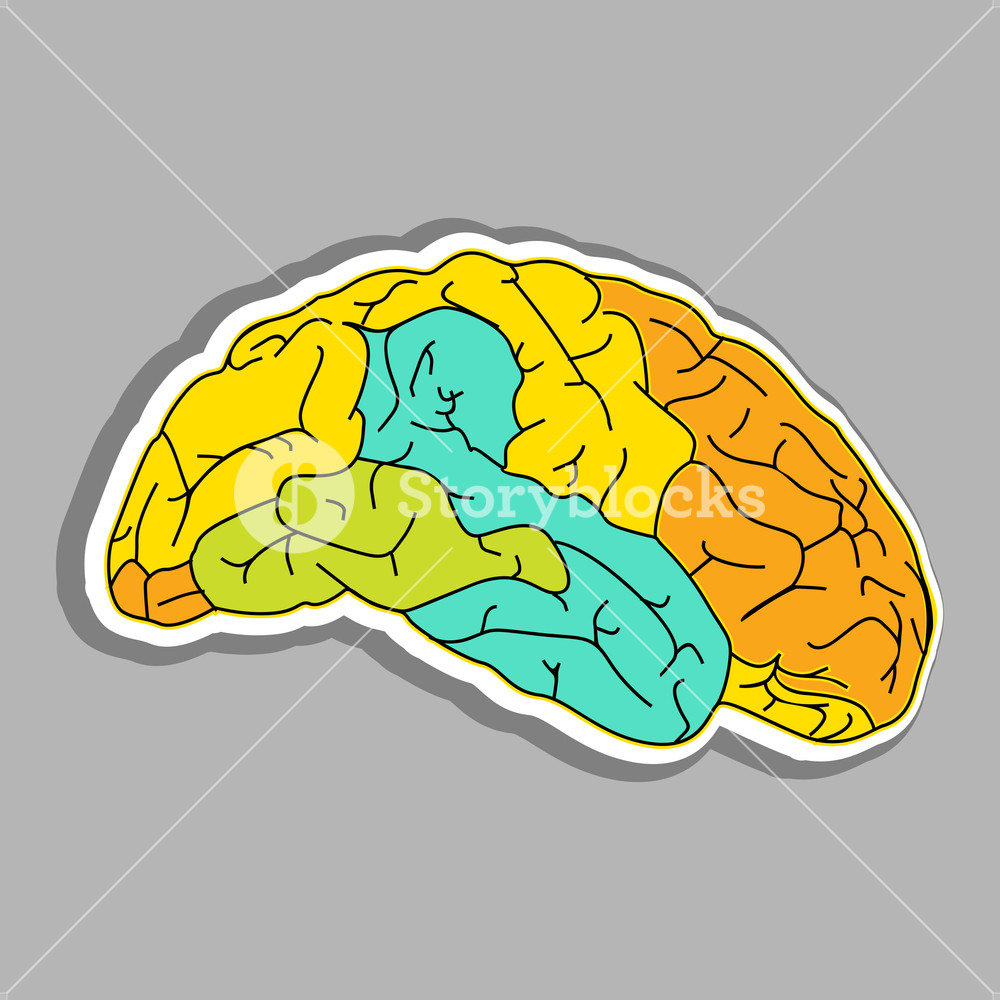 Abstract Medical Concept With Colorful Human Brain On Grey Background.