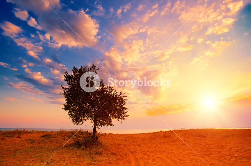 Alone tree on the beach at sunrise