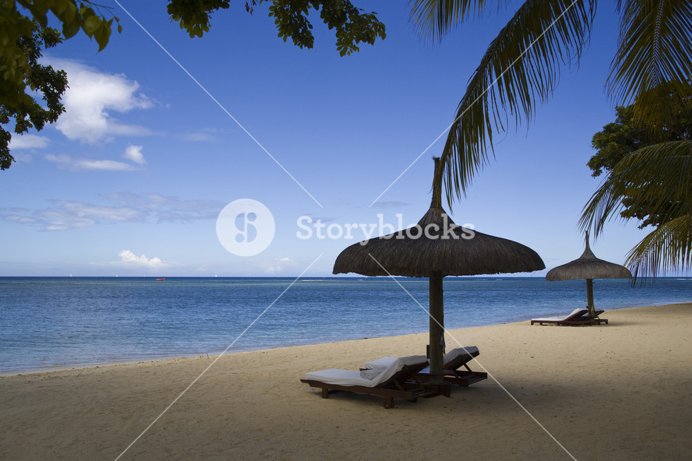 Beach chairs and umbrella under palm trees