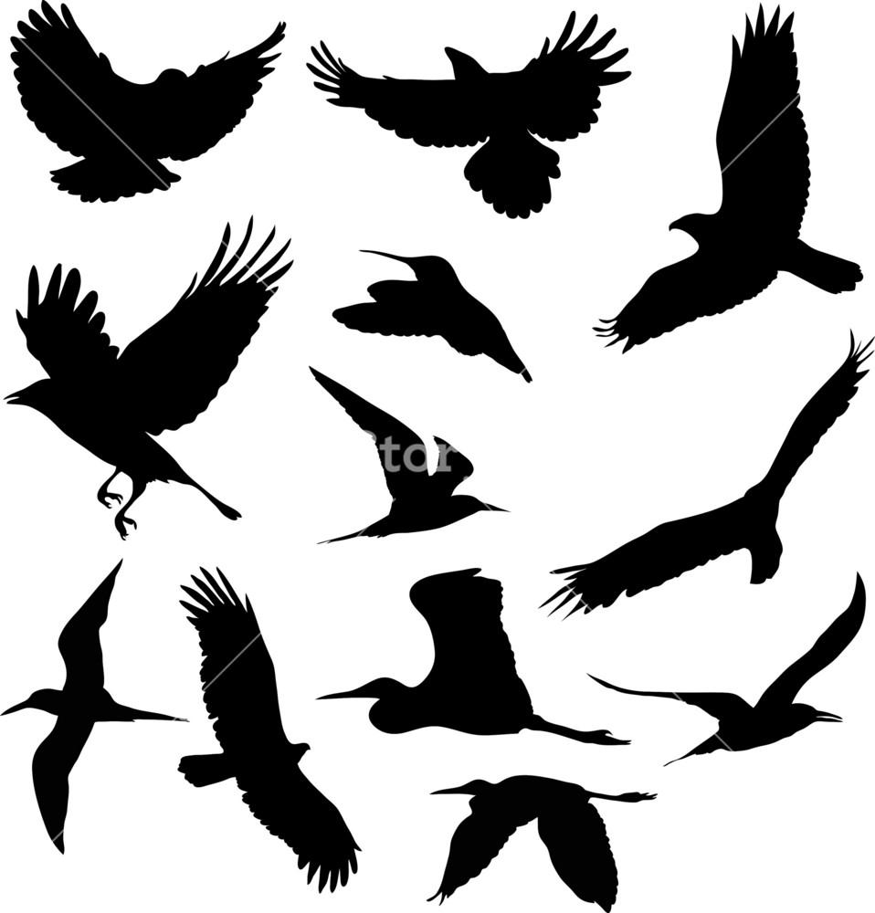 Birds 1 Vector