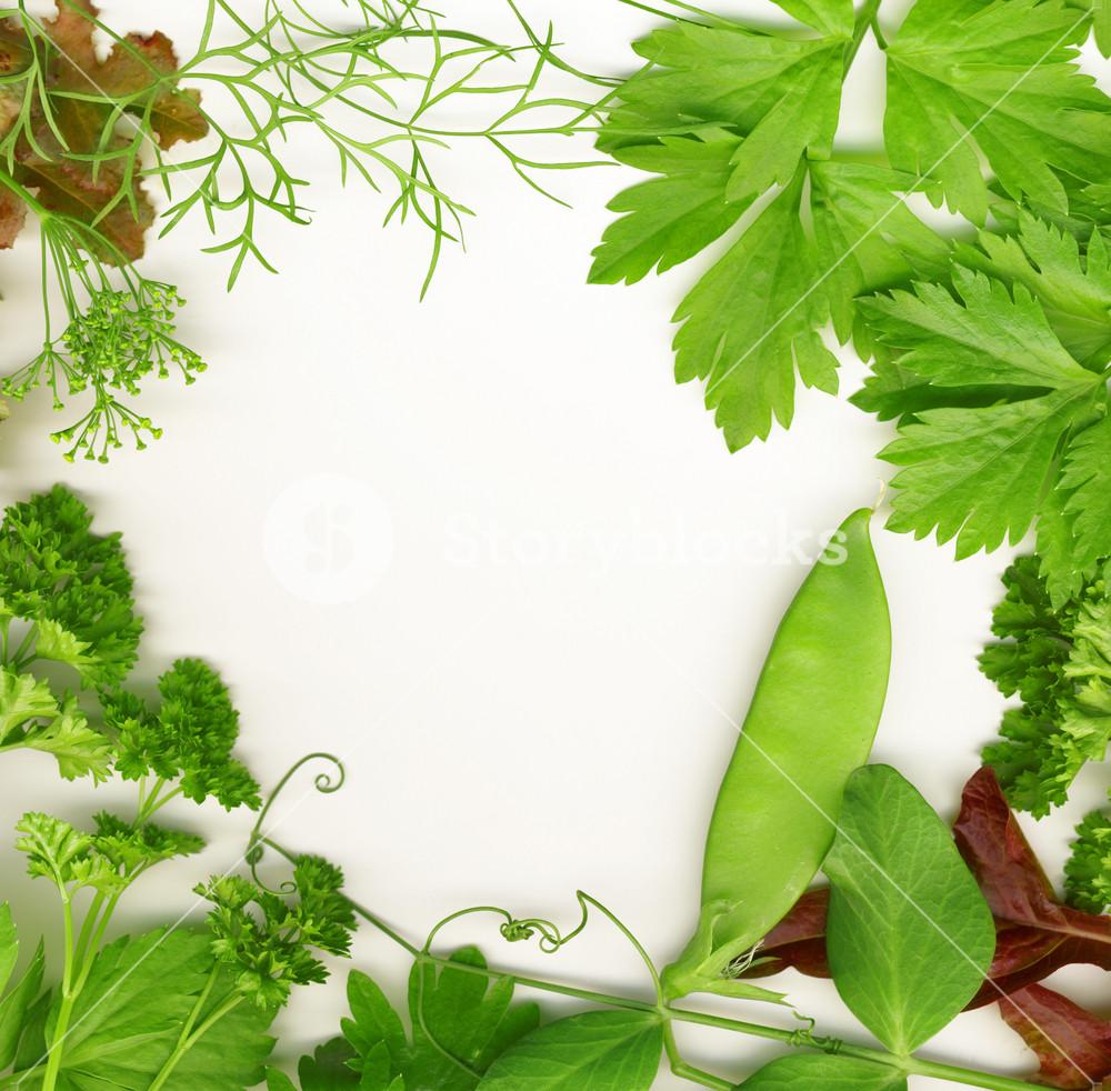 Border Of Fresh Herbs