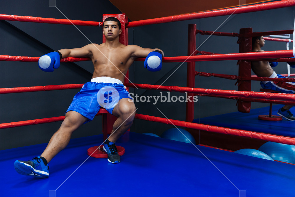 Boxer resting in boxer ring