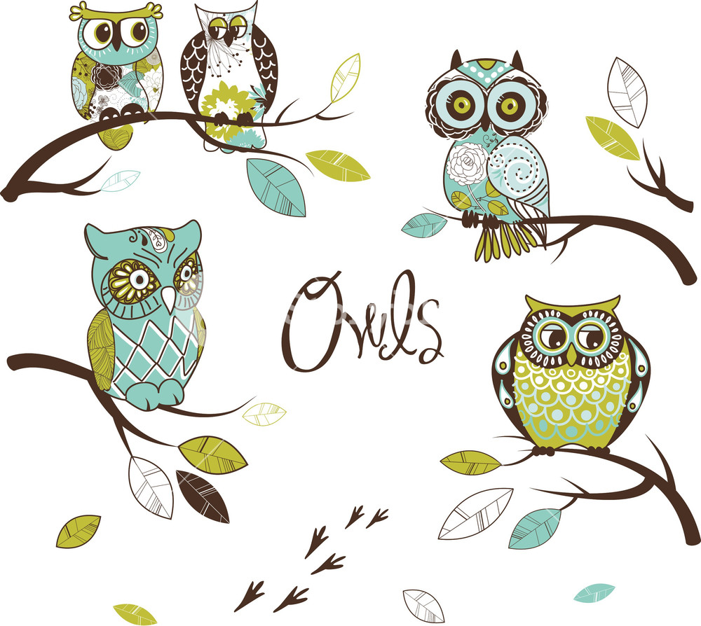 Collection Of Five Different Owls