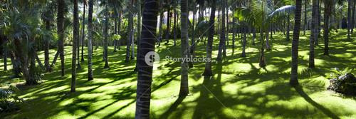 Dappled sunlight in a lush green forest