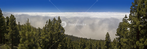 Fog rolling into a vast, sunlit forest
