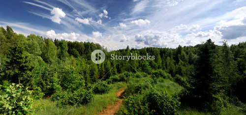 Forest On The Hills In Latvia. Wide View.