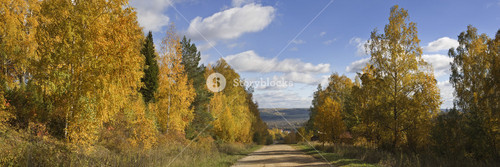 Golden trees and a dirt road in autumn
