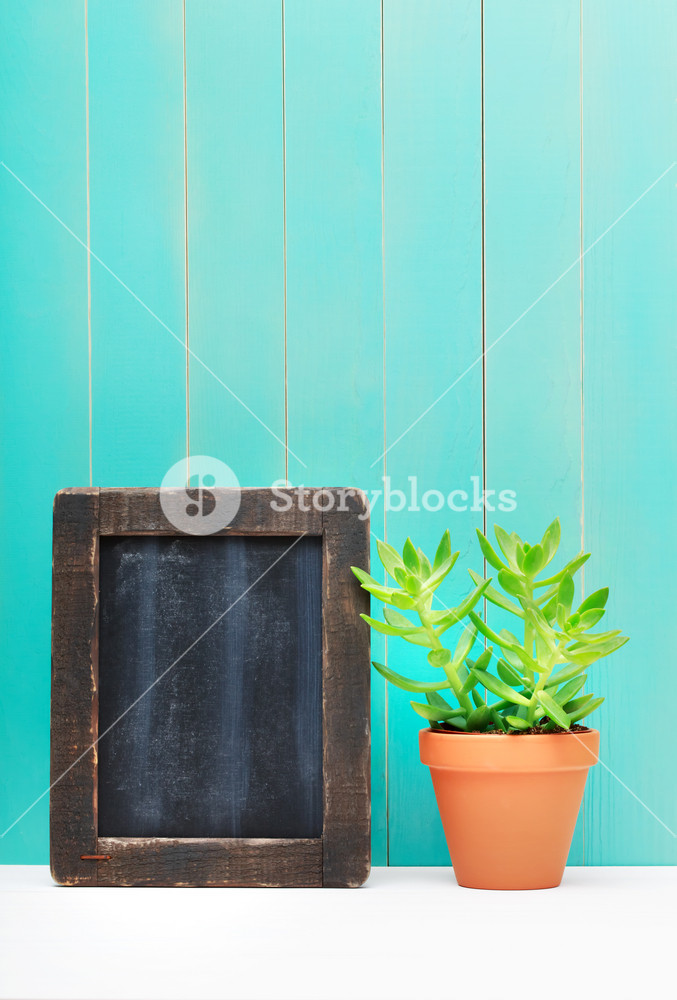 Close up Fresh Green Small Plant Beside Wooden Chalkboard Leaning on the Blue Green Wall