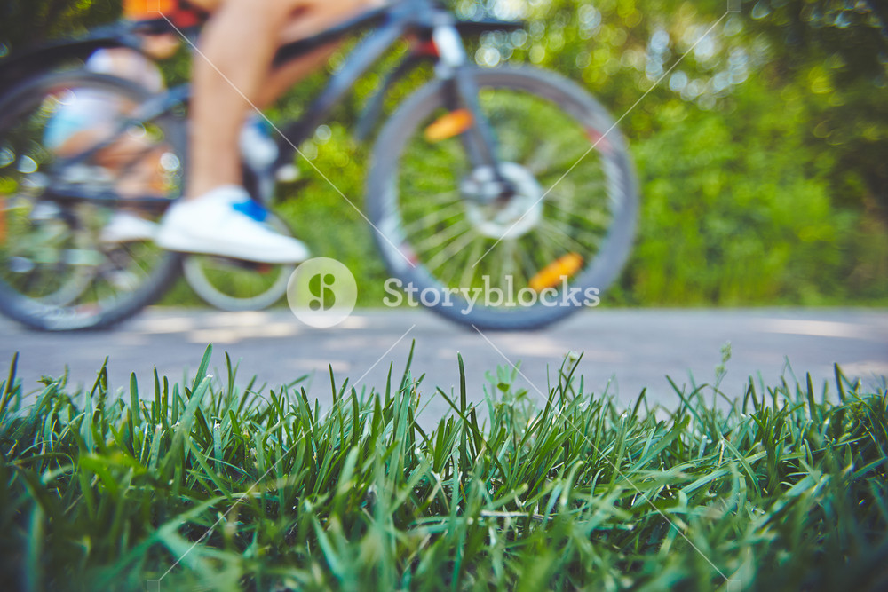 Green grass on the lawn and human on bicycle on background