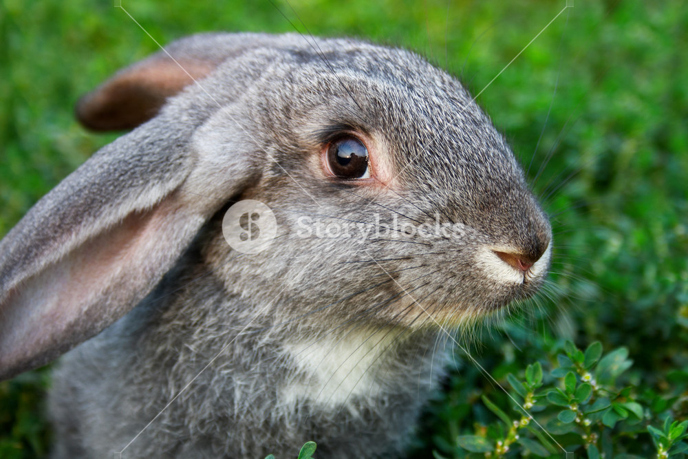 Image of cautious rabbit in green grass outdoor