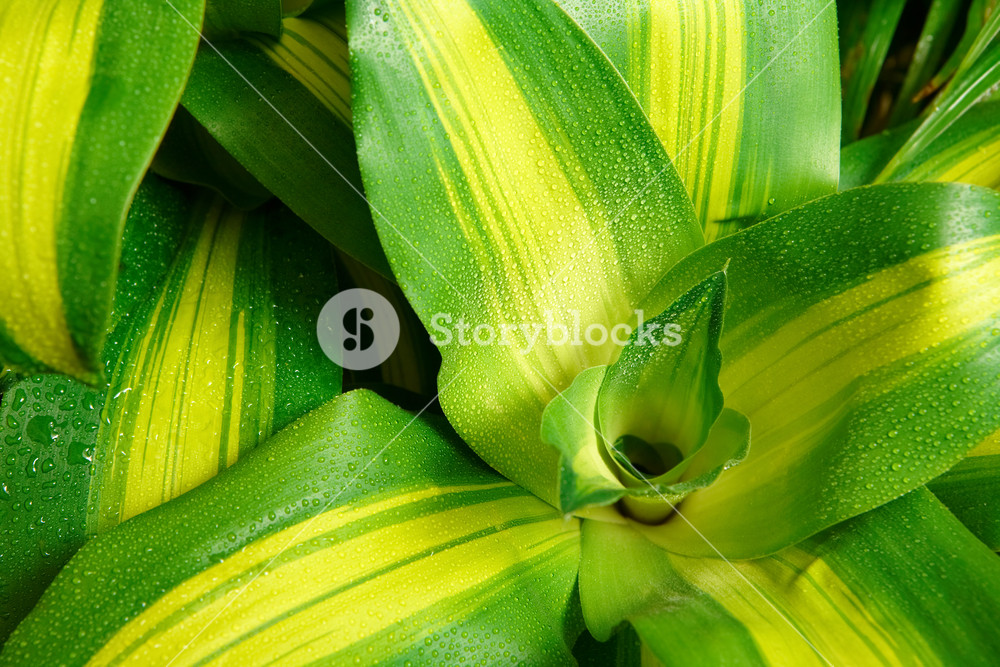 Macro image of fresh leaves of green plant with pure raindrops on it