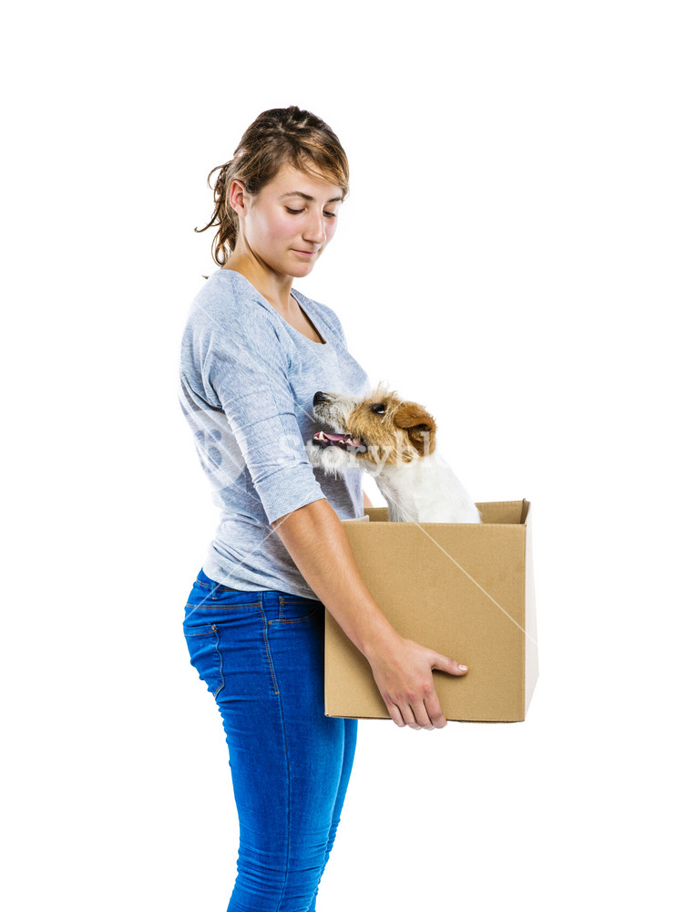 Young woman with her cute parson russell terrier dog in cardboard box moving, isolated on white background