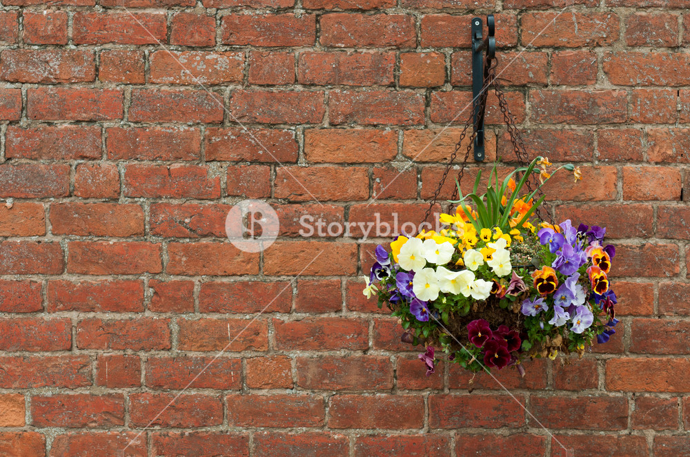 Hanging Flowers Pot