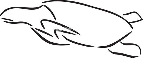 Illustration Of A Tortoise.