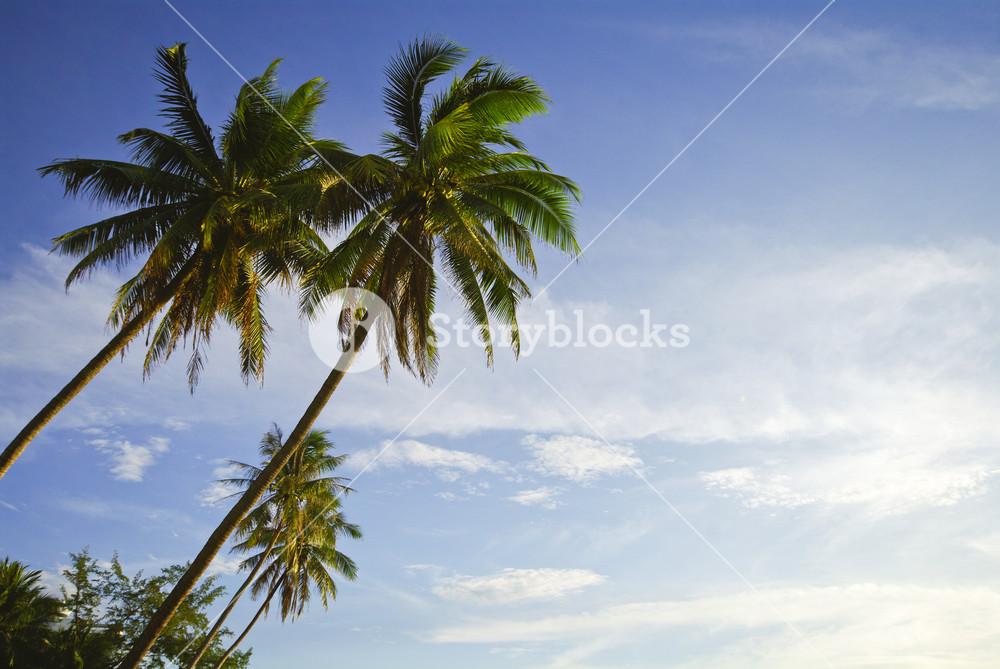 Landscape photo of island beach