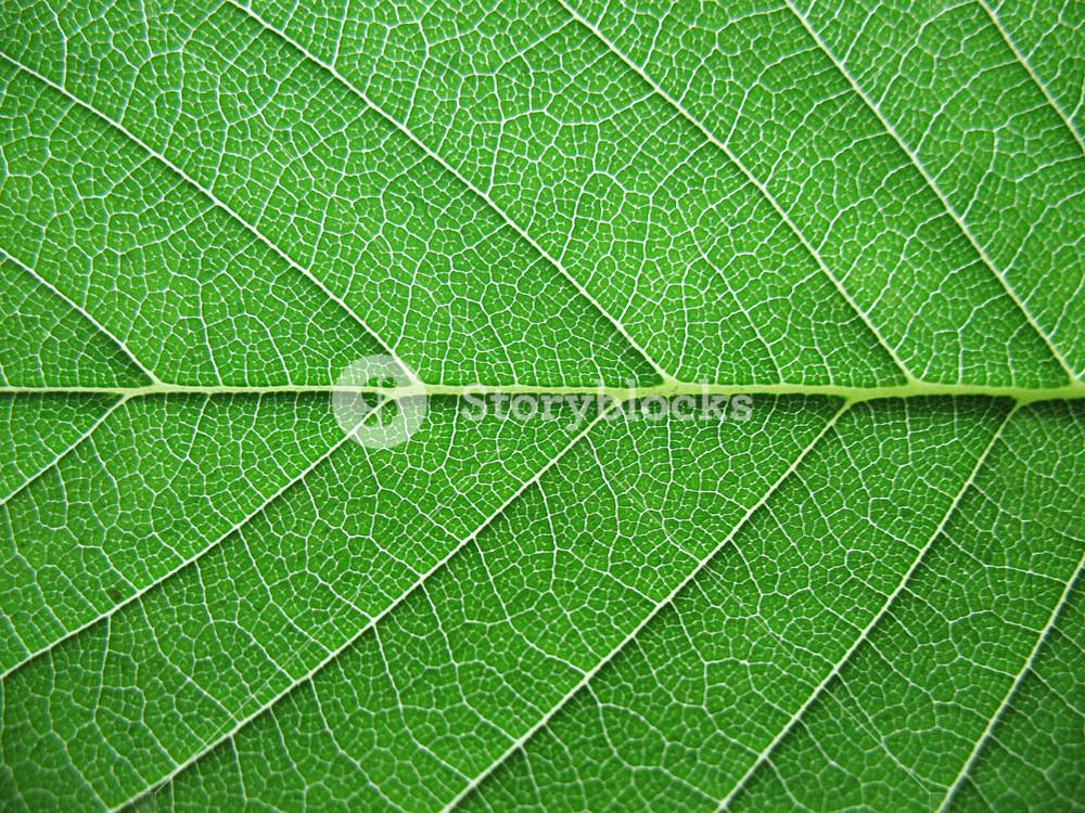 Leaves 1 Texture