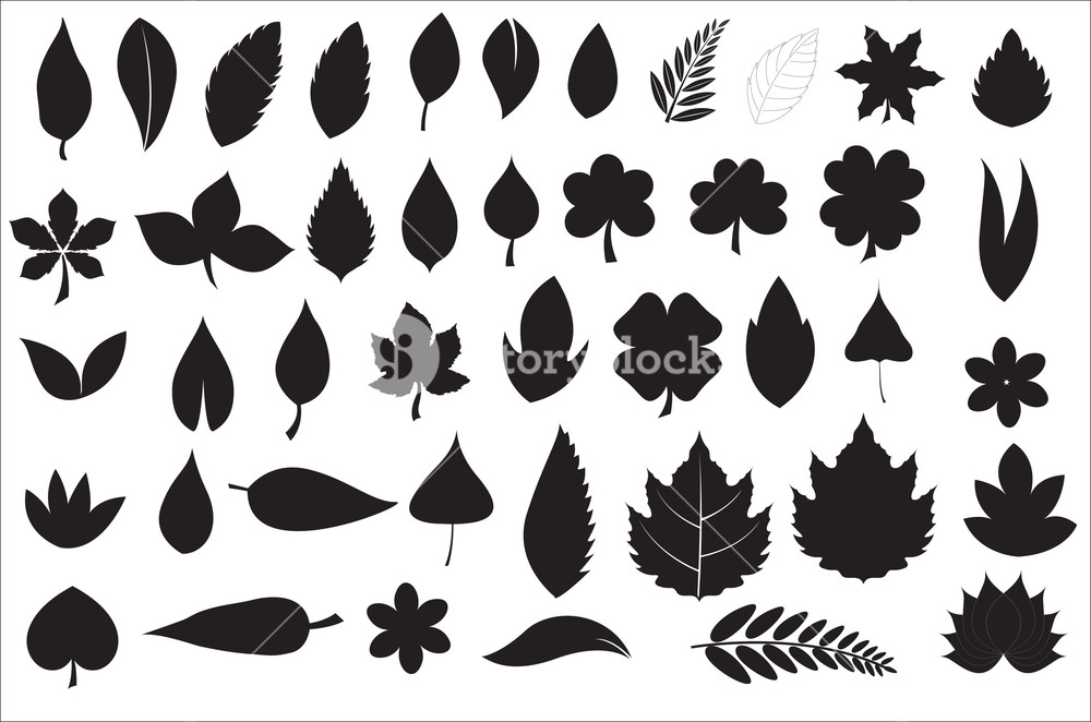 Leaves Shapes