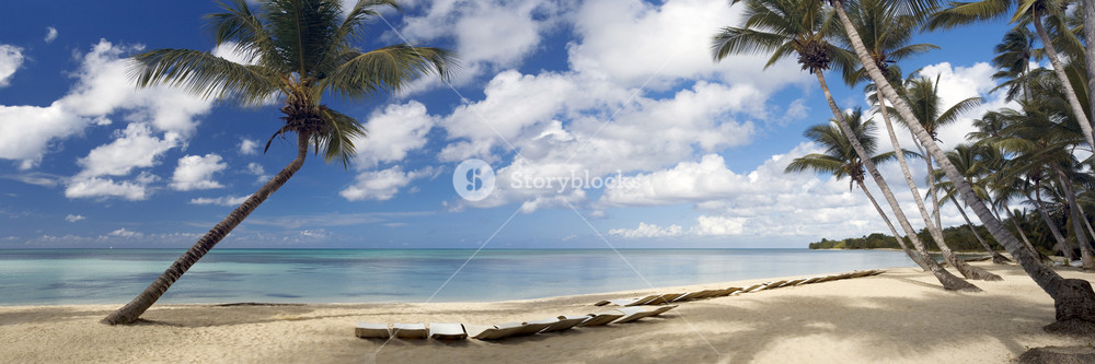 Palm trees and beach chairs at a tropical beach resort