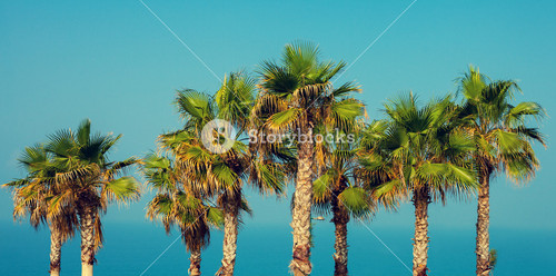 Palm trees on the embankment against sea and sky