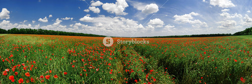 Panorama Of A Poppy Field In Bright Sunny Day