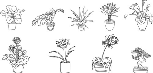 Potted Plants Black And White
