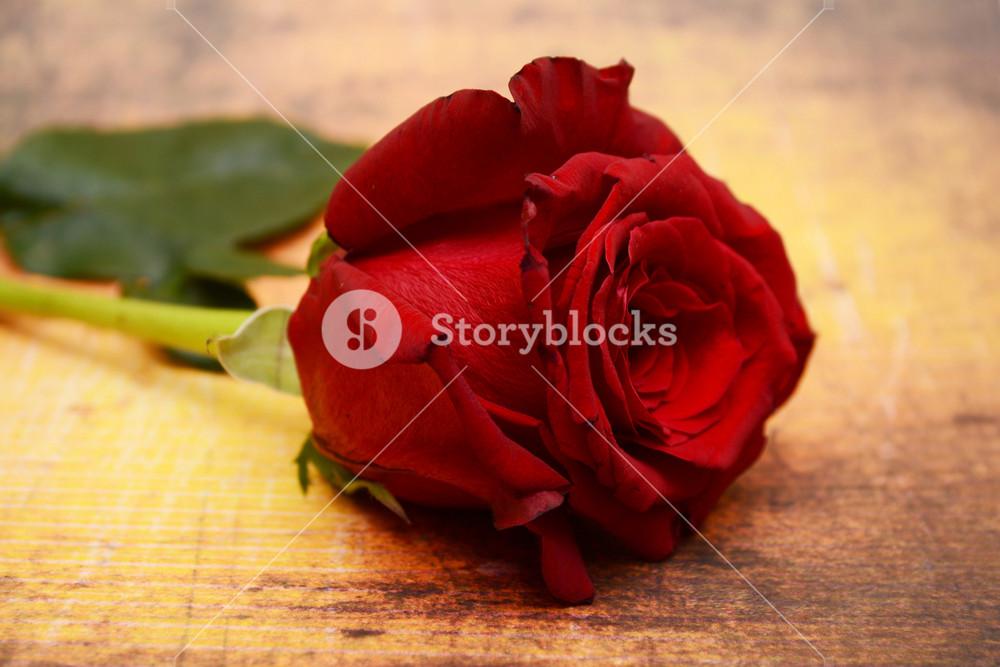 Red Rose On Grunge Background