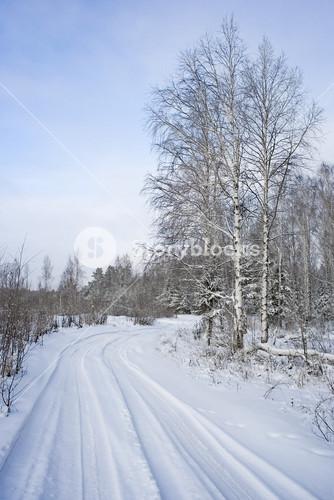 Road through sunlit, snowy trees in winter